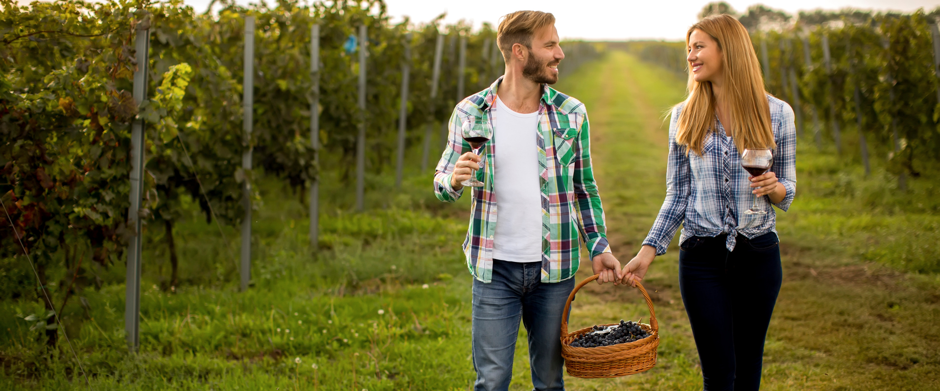 Young happy couple holding glasses of wine in the vineyard